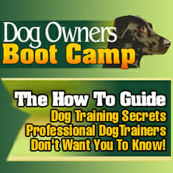 dog owners bootcamp