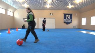 Cooper (Havanese) Puppy Camp Training Video